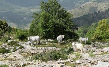 """Itinerari """"Da un borgo all'altro tra natura e cultura millenaria"""""""