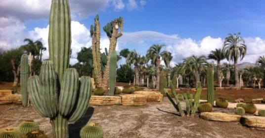 Parco dei continenti – Il mondo botanico di tutto il mondo nella Valle dell'Amaseno