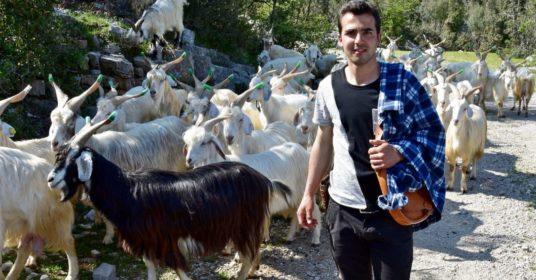 Voci dal territorio: Intervista a Luigi Quinto, pastore di Amaseno